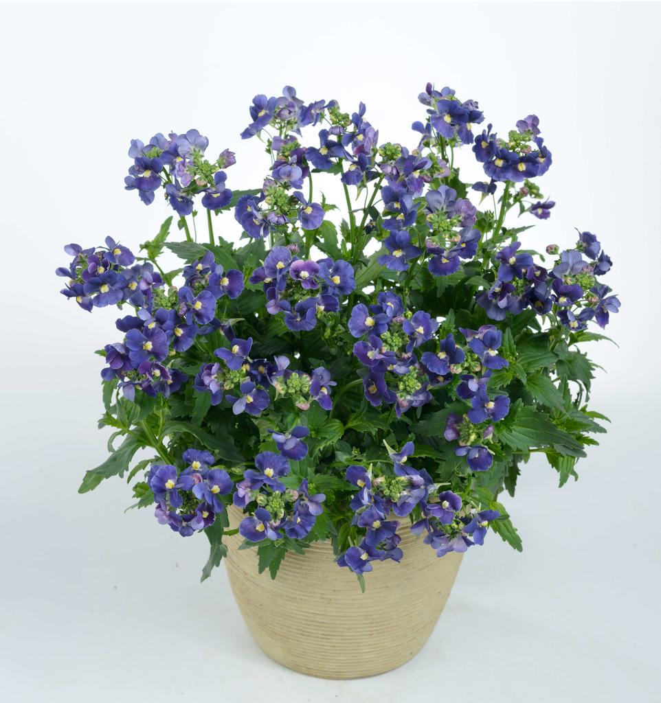Nesia Dark Blue (új)