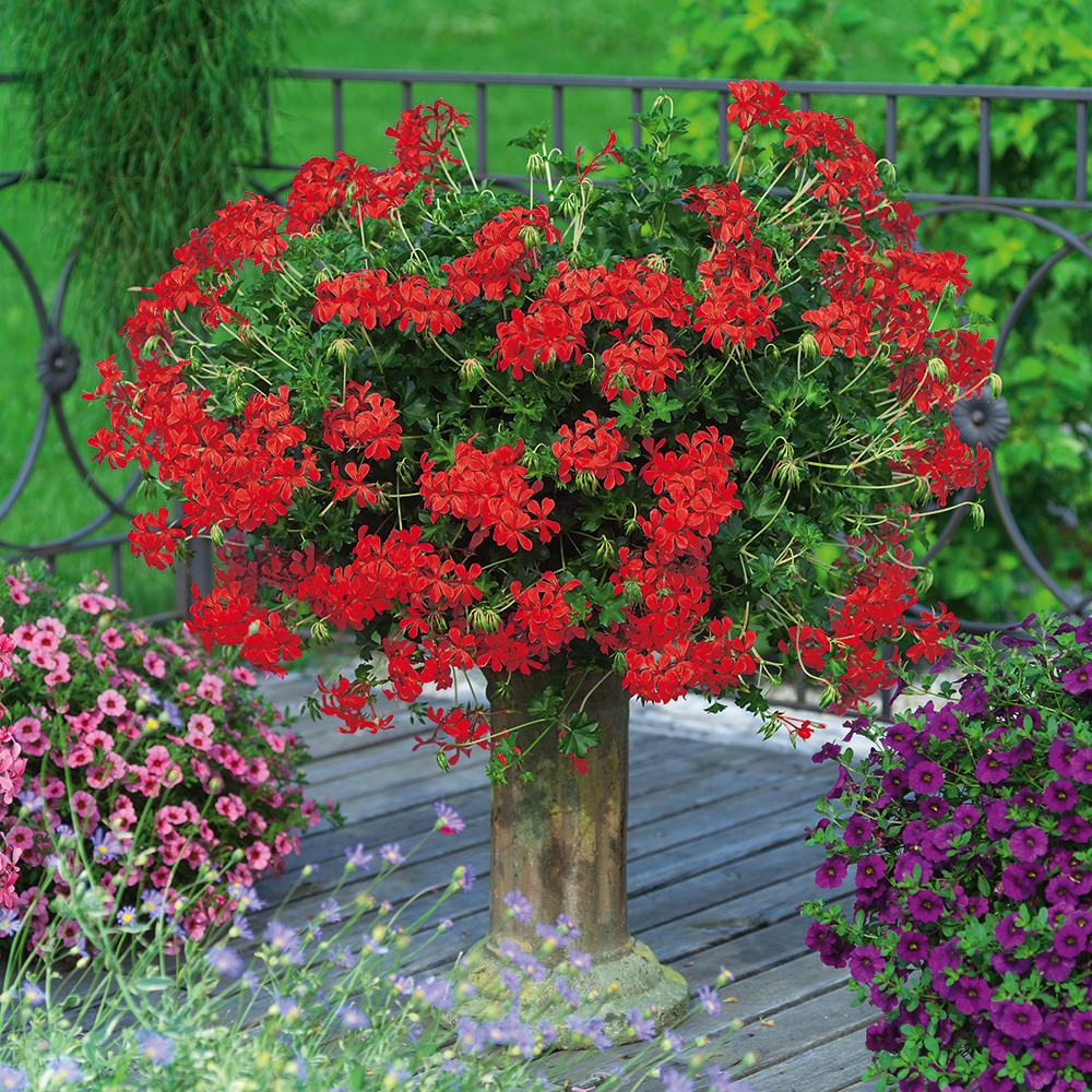 Decora piros / red