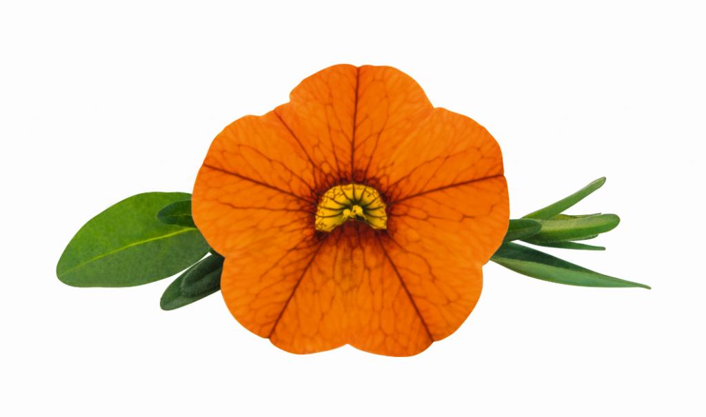 Orange PW (új)