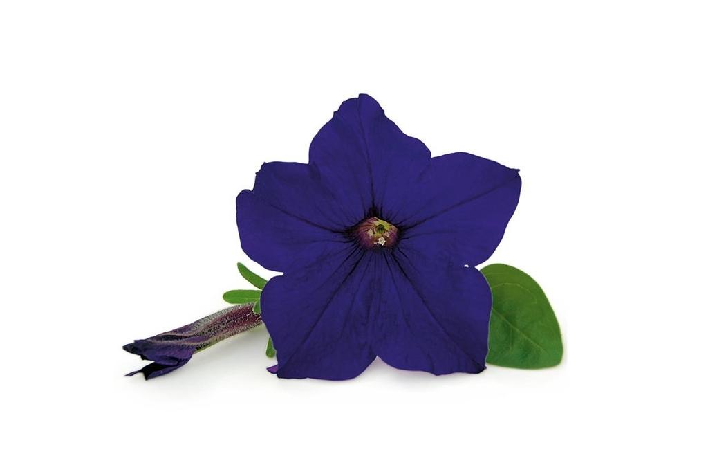 Veranda Blue PW